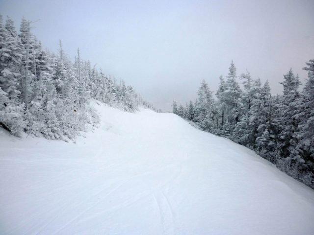 Snow Woodland